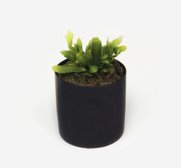 Pot Plant. The Petal Provedore. Melbourne.